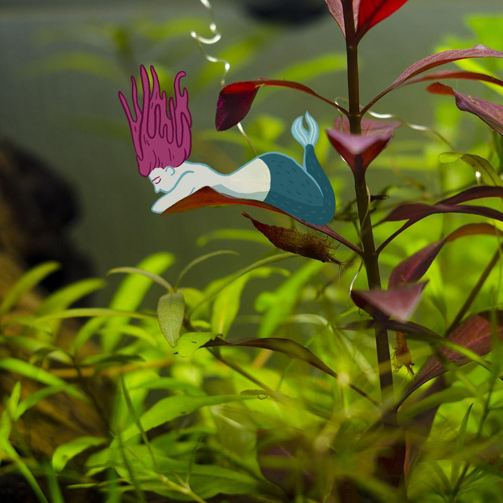 dessin d'une sirène dans un aquarium